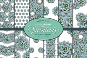 Succulent Echeveria – Digital Paper