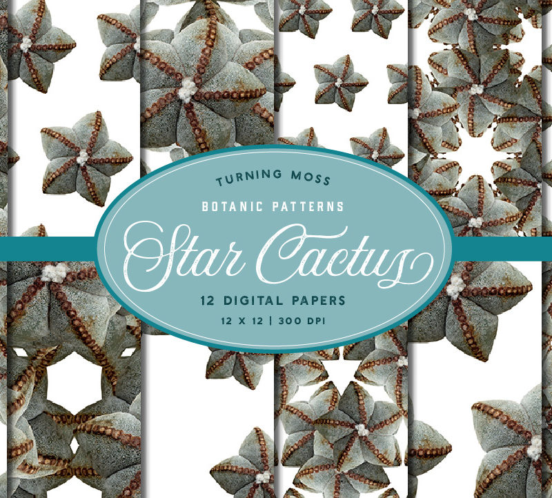 Star Cactus – Digital Paper