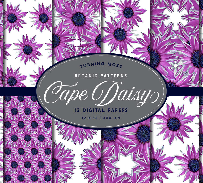 Pink Cape Daisy – Digital Paper