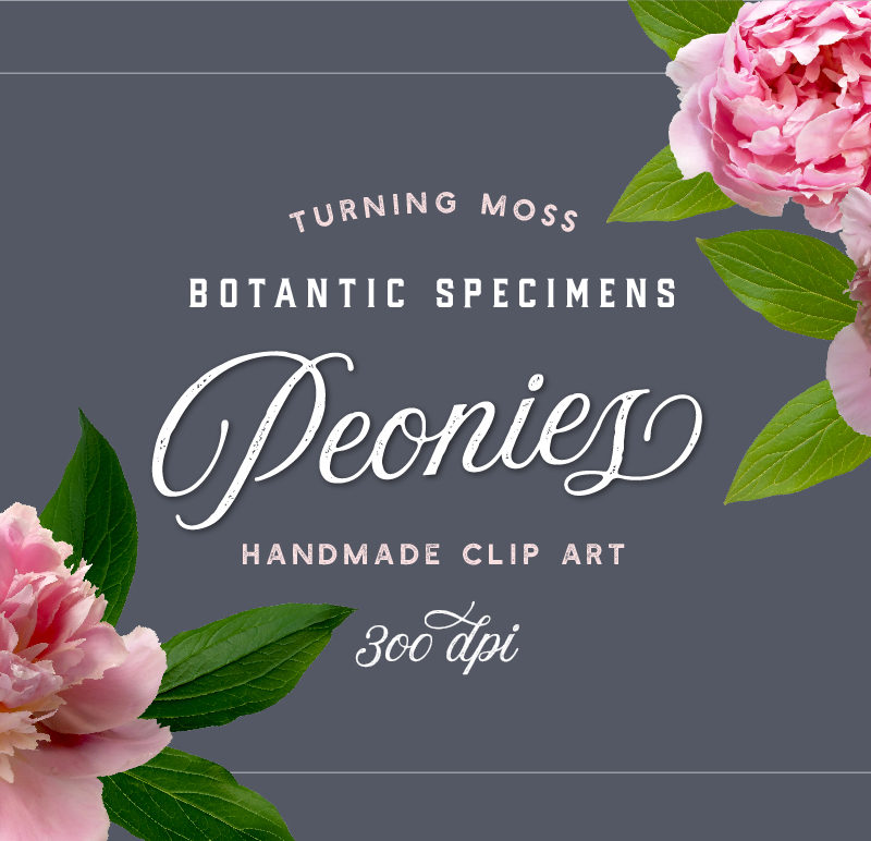 Peonies – Botanic Specimens