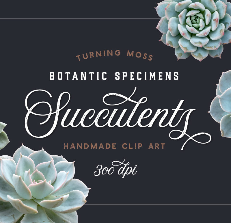 Succulents – Botanic Specimens