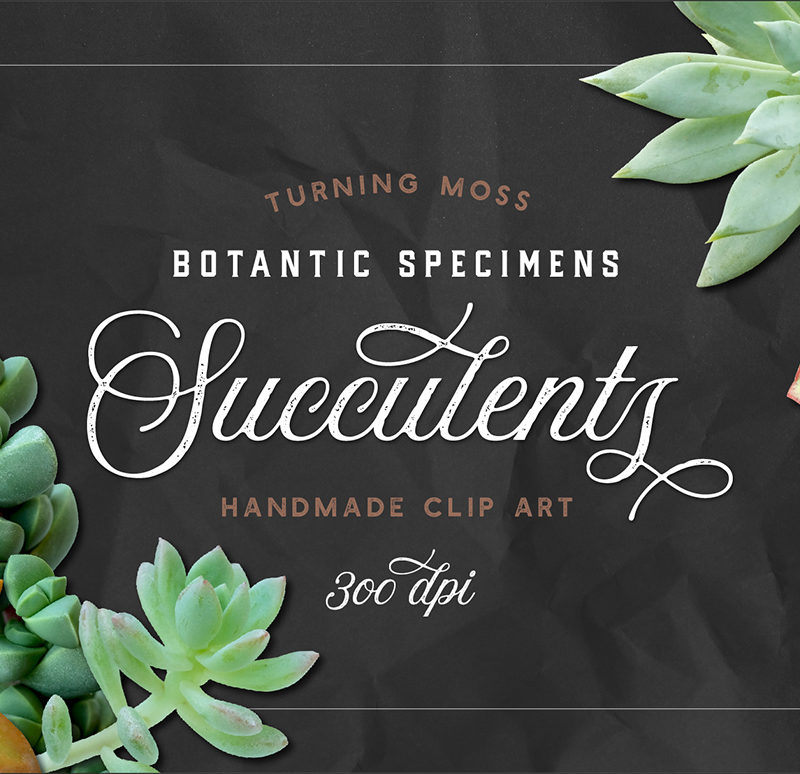 Succulents 2 – Botanic Specimens