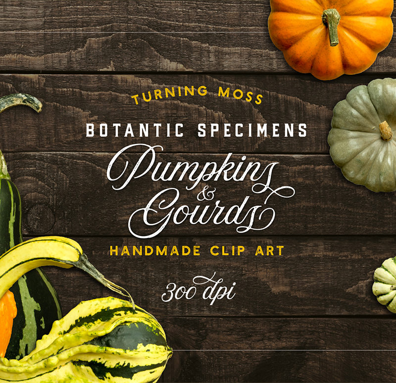 Pumpkins & Gourds – Specimens